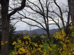 The_Money_Shot_Mountains_from_Bethel_Church_Spring_2014.jpg